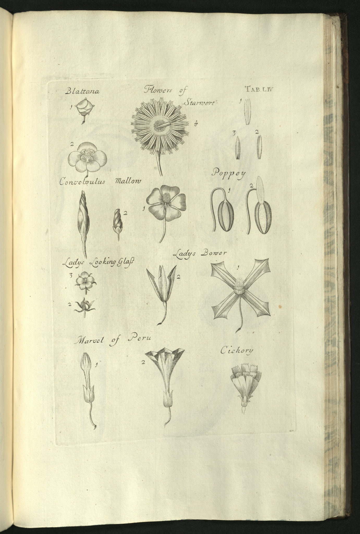Book of the Week — Anatomy of Plants with an Idea of a Philosophical ...